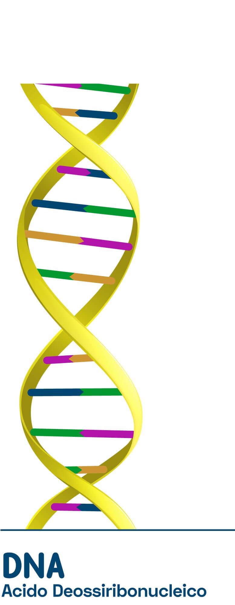 DNA Acido Deossiribunucleico